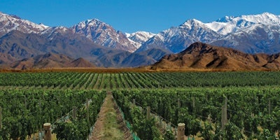 Malbec: Finding Its Place