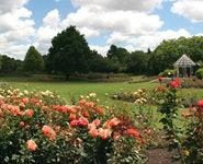 Rogers Rose Garden