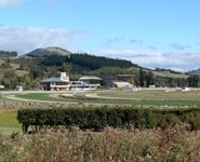 Wingatui Racecourse